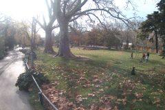 10 parc